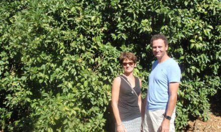 Walking in a citrus paradise, Gospa Citrus Farms