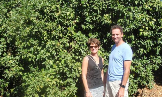 Walking in a citrus paradise, Gospa Citrus Farms
