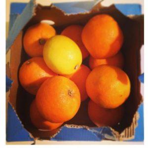 seville-oranges-in-box-marmalade-tips-food-good-housekeeping-uk__large
