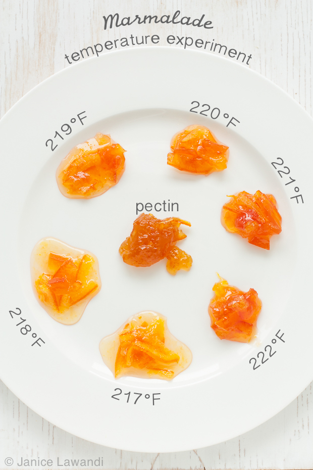 temp-marmalade