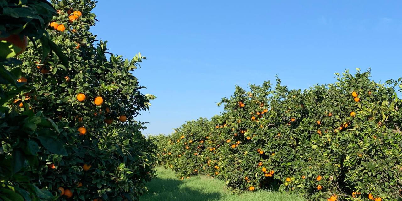 The paradise of Gospa Citrus Farm