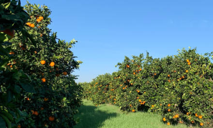 The paradise of Gospa Citrus Farm