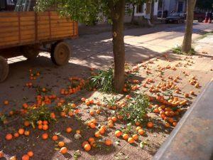 No more street oranges as food.