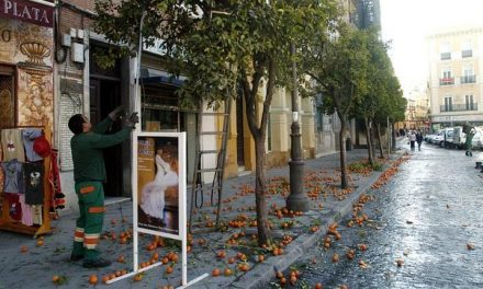 Why don't eat Sevillian sidewalk oranges