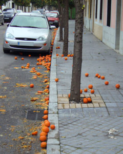 Dirty chemicals on the street Seville Oranges.