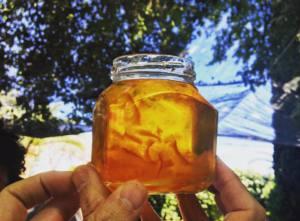 Gospa Citrus Sevilles marmalade