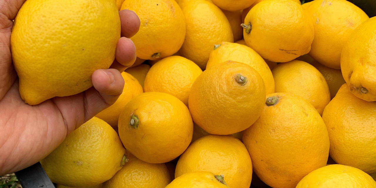 The lemon and its varieties